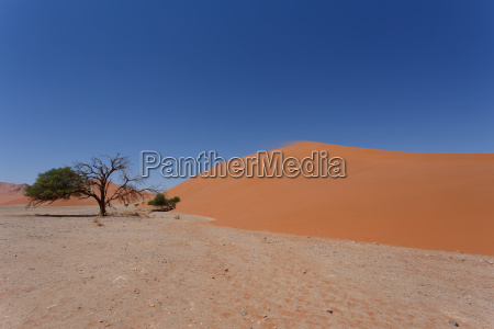 duene 45 in sossusvlei namibia mit