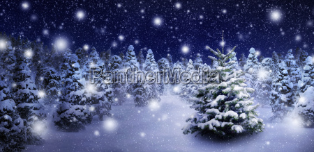 tannenbaum and evocative snowscape