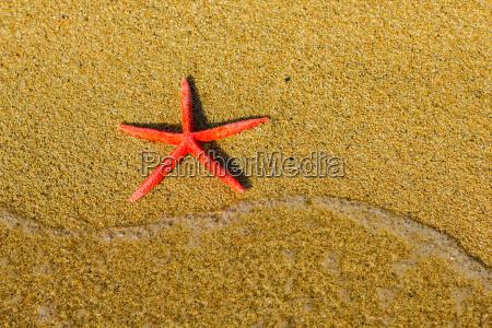 sommerurlaub reise beach starfish