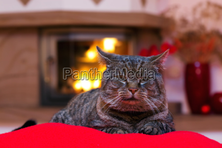gray cat and a fireplace