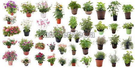 aromatischen, kräutern, und, blütenpflanzen - 15360617