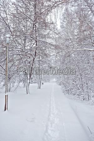 frosty snowy winter street forest