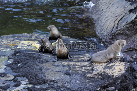 sea lions in milford sound