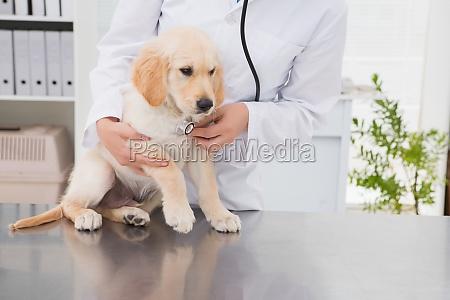 veterinarian examining a cute dog with