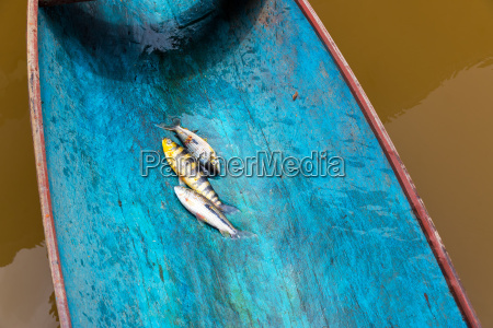 fish in a canoe