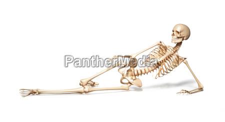 skelett der menschlichen frau die auf