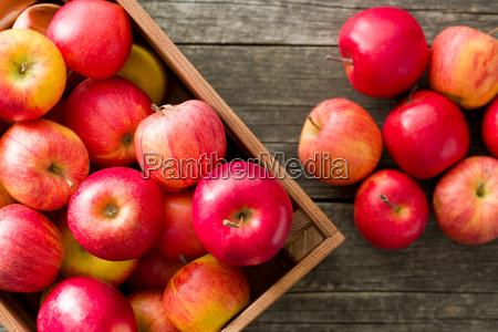 herbst rote aepfel