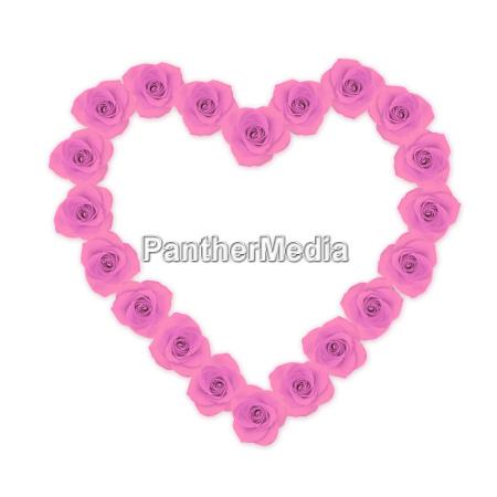 herzform lila rose blumen auf weissem