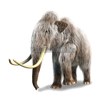 photorealistic 3 d wiedergabe eines mammuts