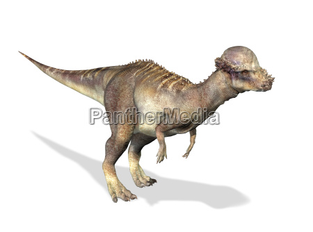 fotorealistische 3 d darstellung eines pachycephalosaurus