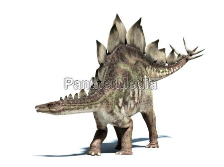 stegosaurus dinosaurier isoliert auf weiss mit