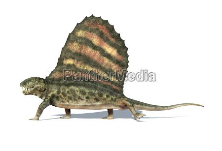 dimetrodon dinosaurier gesehen von einer seite