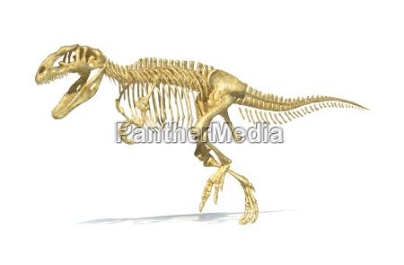 giganotosaurus dinosaurus voller fotorealistische skelett wissenschaftlich