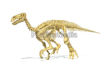 iguanodon dinosaurier vollstaendige skelett fotorealistische und