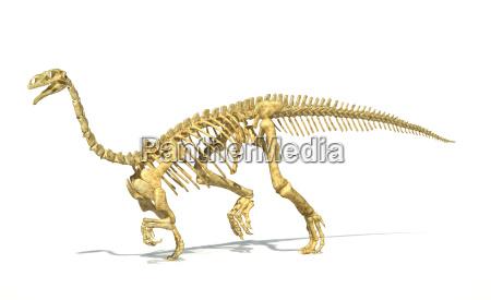 plateosaurus dinosaurier voller fotorealistische skelett wissenschaftlich