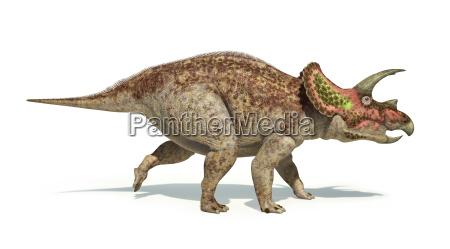 triceratopsdinosaurier photorealistic und wissenschaftlich korrekte darstellung