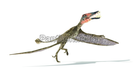 dorygnathus fliegende dinosaurier fotorealistische darstellung nehmen