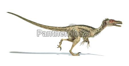 velociraptor dinosaurier wissenschaftlich korrekt mit federn