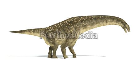 titanosaurus dinosaurier fotorealistische und wissenschaftlich korrekte
