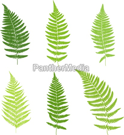 set of fern frond silhouettes vector