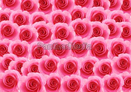 blumen rosa rose strukturierten hintergrund