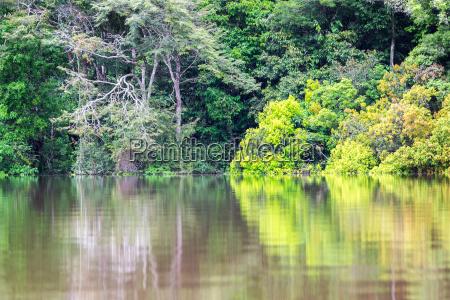 green jungle reflection
