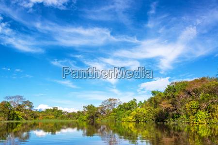 amazon jungle in brazil