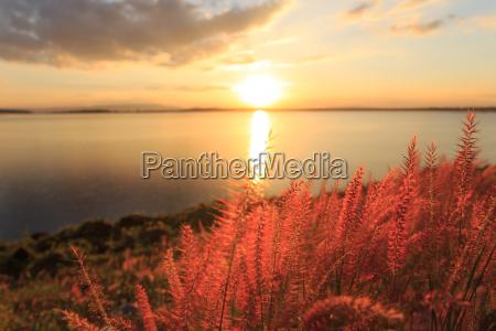 closeup grass at sunset beauty landscape