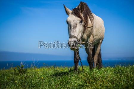 weisses pferd mit sattel an der