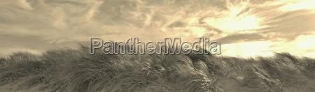 dune landscape panorama in sepia