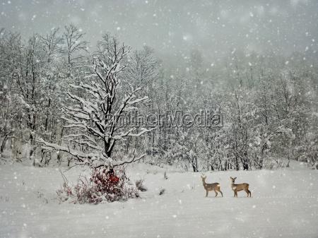 alternde winterfotografie