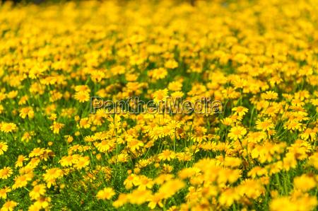 blume pflanze gewaechs flora botanik frische