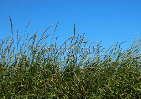 blatt baumblatt space wild landwirtschaft ackerbau