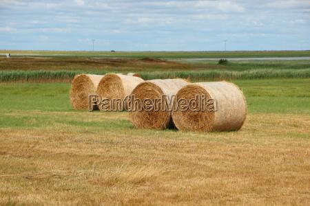 closeup nahaufnahme horizont industrie landwirtschaft ackerbau