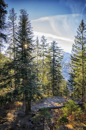 forest bavaria alps