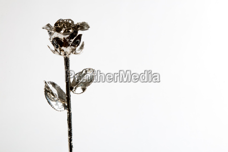 silber rose