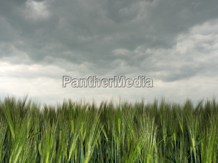 agriculture field dramatic thunderstorm thundreous cloudy