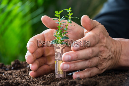 businessmans hands protecting plant rolled with