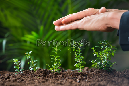 businessmans hands protecting plants growing on