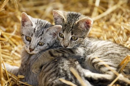spielende katzenkinder auf gruener wiese