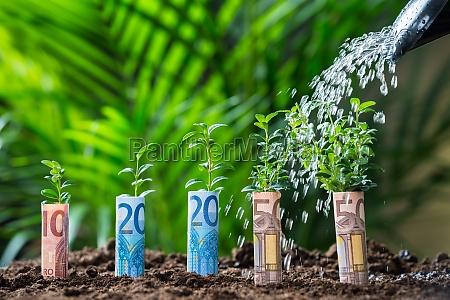 wasser gegossen auf pflanzen mit euro