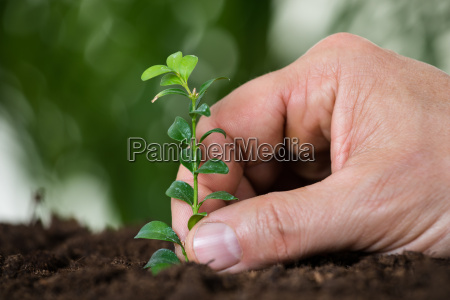 mans hand planting small tree on
