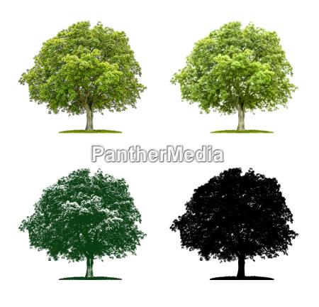 baum in vier unterschiedlichen illustrationstechniken