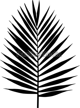 palm leaf silhouette vector illustration tropical