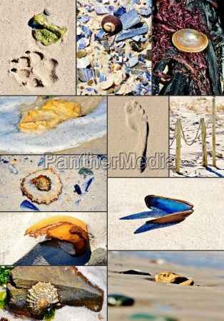 collage of beach finds