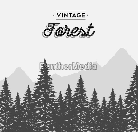 vintage forest text label on winter