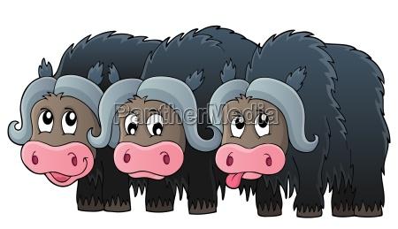 three muskoxen theme image 1