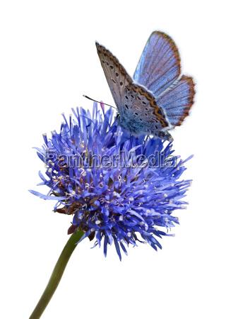 blue butterfly on flower cutout
