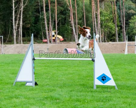 sport dello sport svezia cane saltare