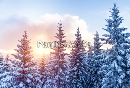 schoene winterwald